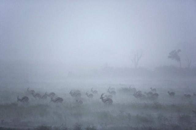 Chrstine et Michel Denis-Huot - Photo d'animaux sous la pluie