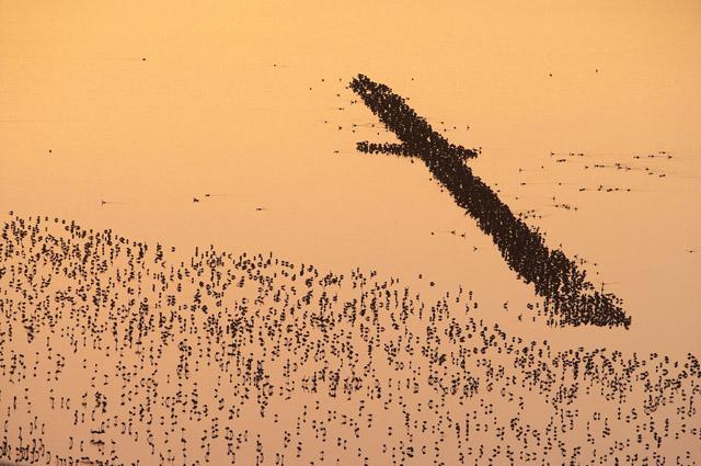Chrstine et Michel Denis-Huot - Flaments sur lac au coucher du soleil